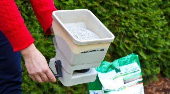 When to Fertilizing Your Lawn; Featured image