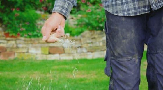 Fertilizing lawn; Image
