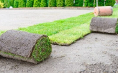 How to Plant a New Lawn: A Complete Beginner Guide