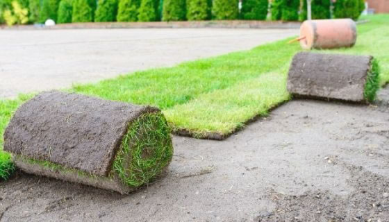 how to plant a new lawn; featured Image