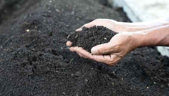 compost to the soil; Image