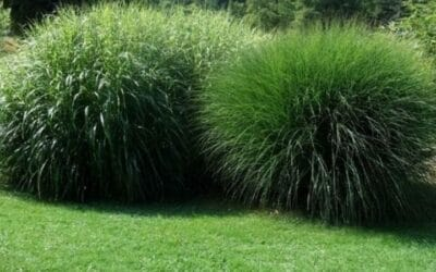 Best Time to Plant Grass Seed | Step By Step Guide