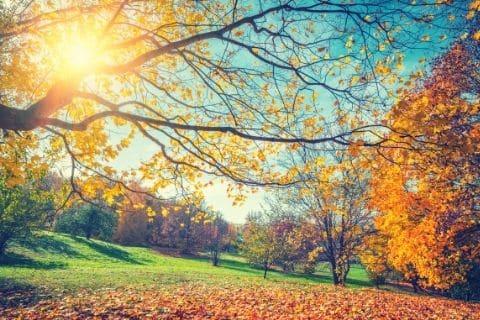 Lawn care in Autumn
