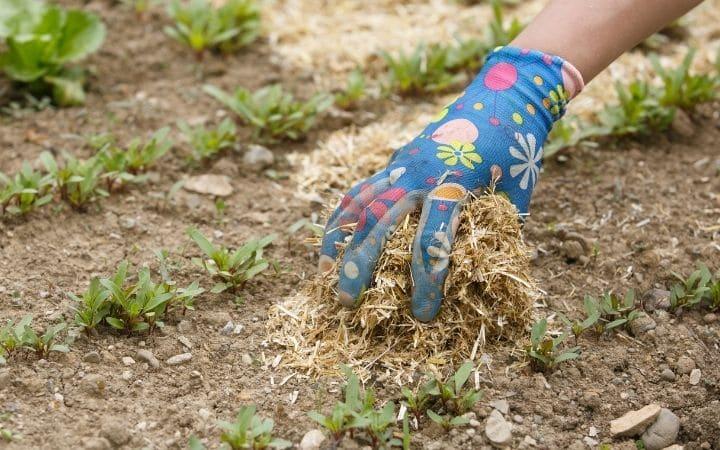 Benefits of mulching