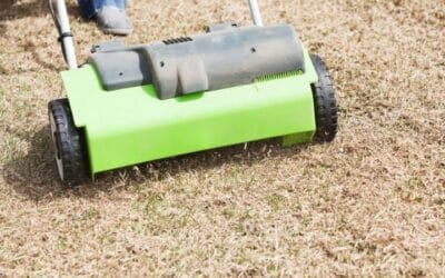 Best Time to Dethatch Lawn | Lawn Dethatching Tips