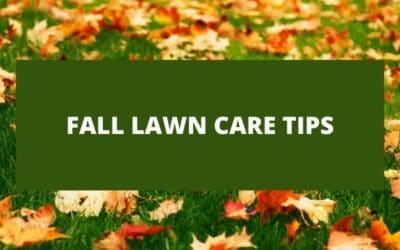 Fall Lawn Care | Essential Fall Lawn Care Tips