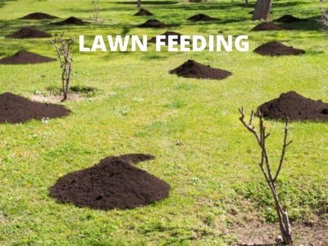 Image, LAWN FEEDING.